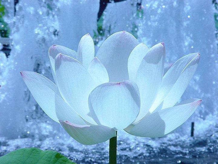 S'aimer soi-même. dans Les Nobles Vérites du Bouddhisme pll